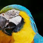 Trochę tropików na Dolnym Śląsku, odwiedzamy papugarnię!